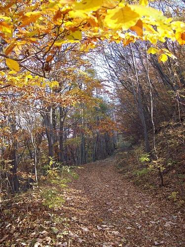 Terra Berica, sentiero tra gli alberi